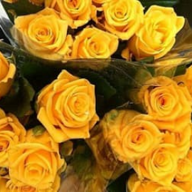 #flowers  #roses  #yellow